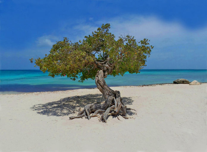 Aruba's most photographed fofoti