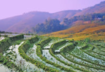 The rice terraces , The most beautiful rice terraces are found in the Lao Chai, Ta Van, Y Linh Ho, Cat Cat and Ta Phin valleys