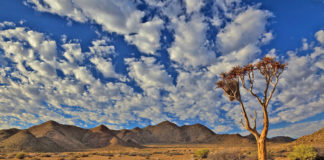 The landscape contains one of the richest desert flora in the world