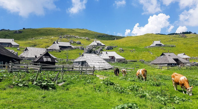 In winter Velika Planina becomes a magical place. The mountain becomes a small ski resort, where you can sled, ski or walk on the snow-covered slopes.